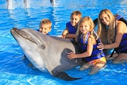 Swimming with Dolphins in Cabo San Lucas Mexico